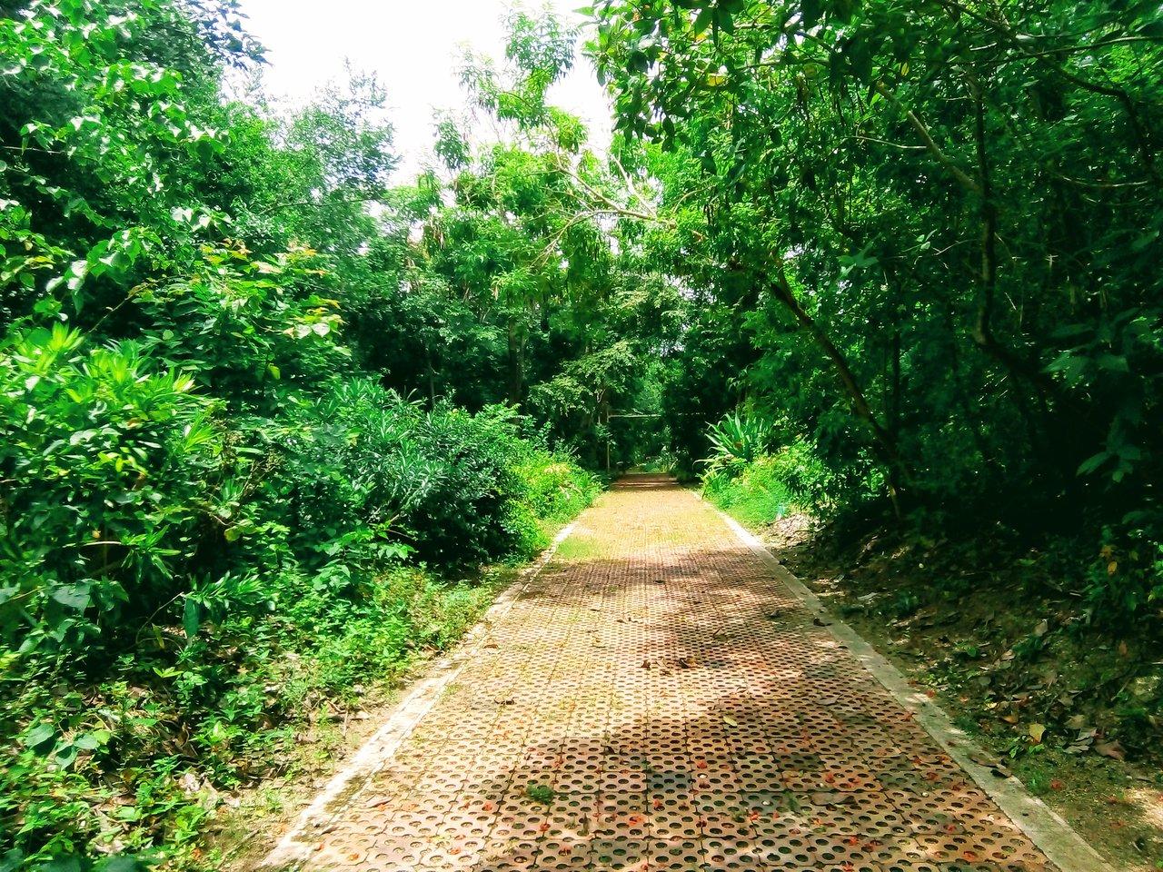 Mucha vegetacion y un camino