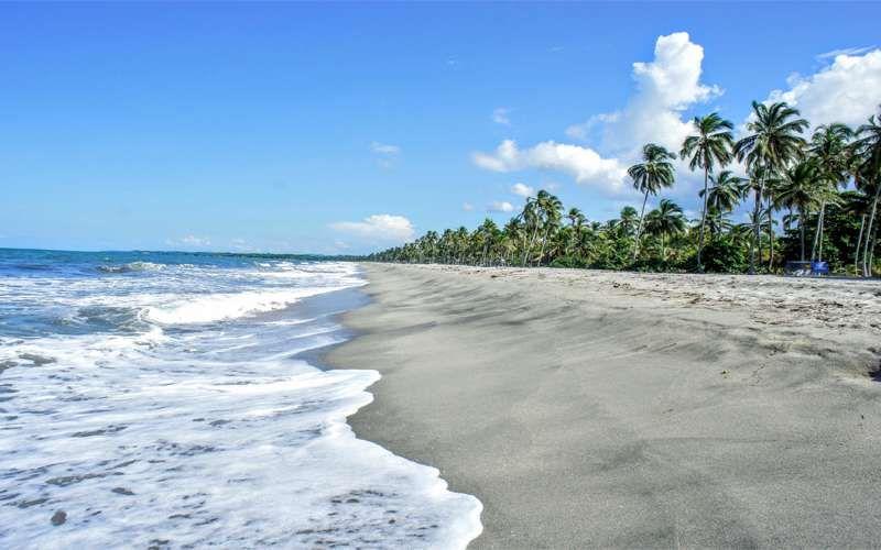 Playa con palmeras altas